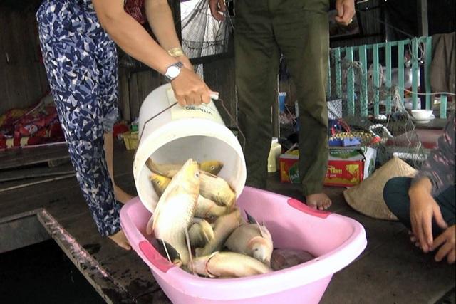 Cá nuôi bè trên sông La Ngà lại tiếp tục bị chết trong 2 ngày 16 và 17/12