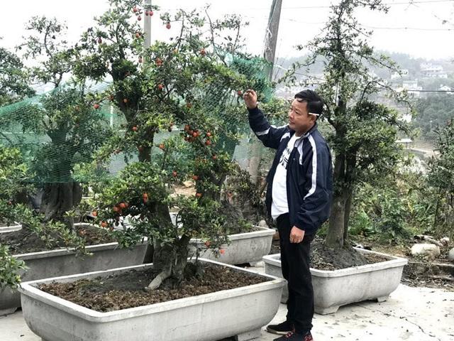 Một cây hồng đá được khách Vũng Tàu đặt mua với giá gần 600 triệu đồng