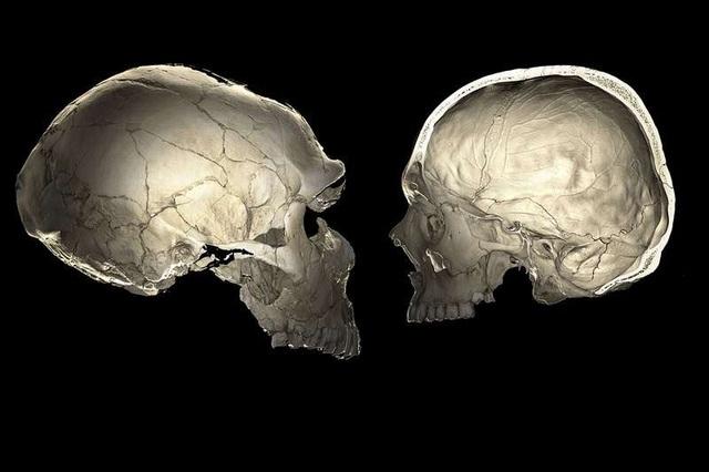 Những người đầu hơi bẹp là do gen di truyền của người Neanderthal - Ảnh 1.