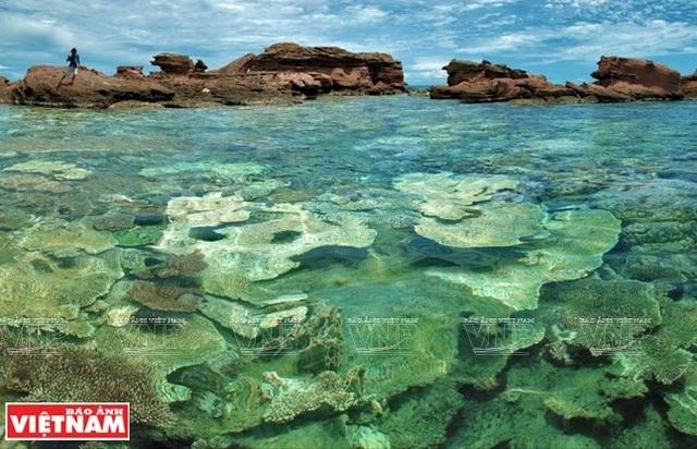 Khám phá vẻ đẹp hoang sơ của An Thới với dải san hô đẹp nhất Việt Nam - 2