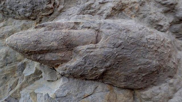 Ảnh cận cảnh phần móng vuốt từ dấu chân một con Iguanodontian – Ảnh từ Neil Davies, Đại học Cambridge