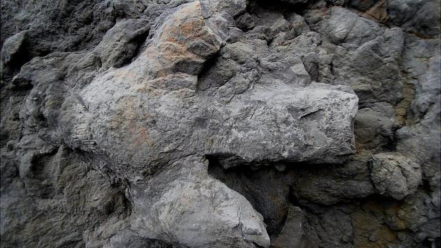 Một dấu chân Iguanodontian lớn - Ảnh từ Neil Davies, Đại học Cambridge