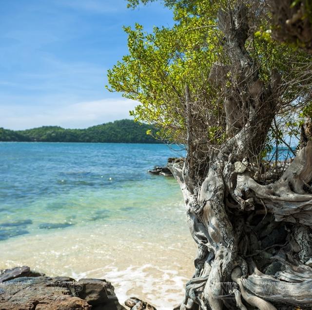 Khám phá vẻ đẹp hoang sơ của An Thới với dải san hô đẹp nhất Việt Nam - 6