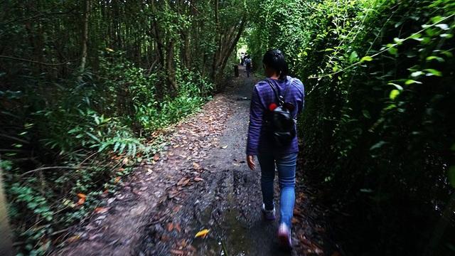 Tour TPHCM - trung tâm triển lãm yến sào VN - rừng phòng hộ Cần Giờ (Dần Xây) - TPHCM: đi về bằng tàu 1 ngày (ăn trưa). Ảnh: Trải nghiệm đi bộ trong rừng ở Cần Giờ.