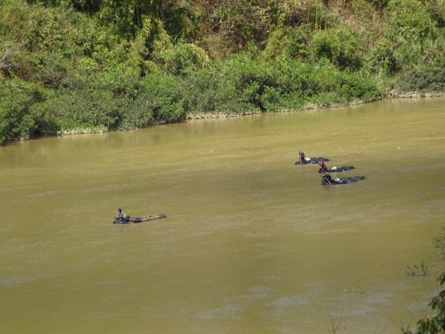 Từng đoàn gỗ lậu ngang nhiên vượt sông Đăk Bla về hạ du
