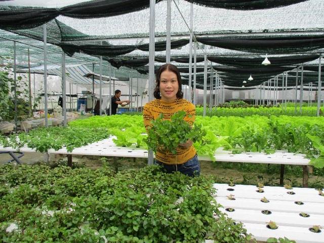 Vườn rau thủy canh của chị Y có gần 20 loại rau: xà lách ôn đới, xà lách mỡ, xà lách lolo tím, xà lách roman…Ảnh: Trần Hậu
