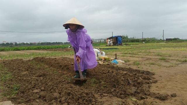 Nhiều nông dân trắng tay sau trận mưa lịch sử