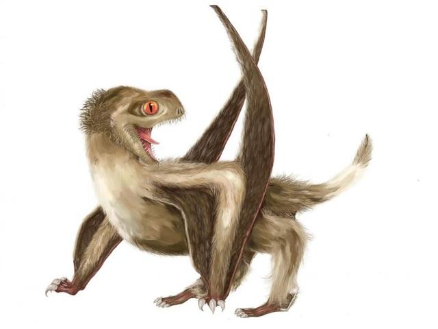 Thằn lằn bay có thể có lông - 1