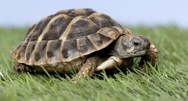 Rùa đực trở thành con cái vì nóng lên toàn cầu - Ảnh 1.