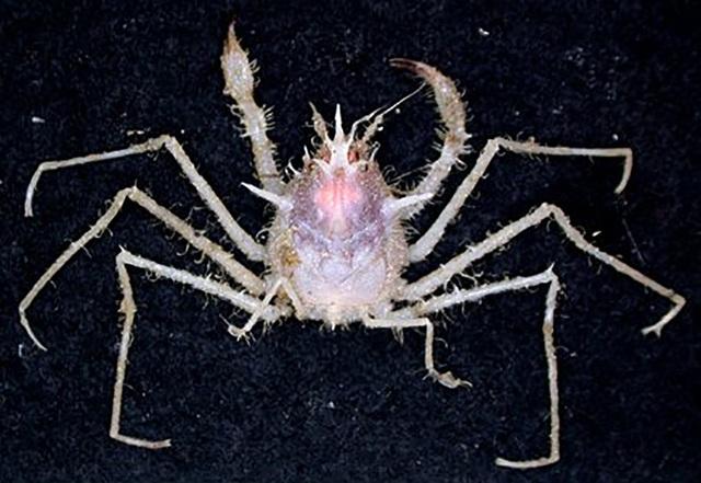 Ngắm những sinh vật biển kì lạ các nhà khoa học vừa tìm thấy ở Australia - Ảnh 7.