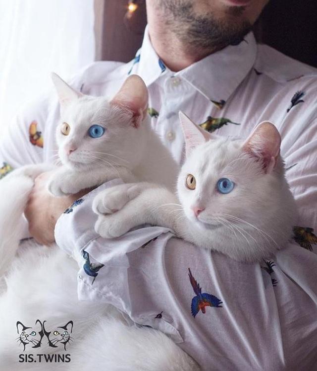 Mèo song sinh 2 màu mắt làm cư dân mạng bấn loạn - Ảnh 3.