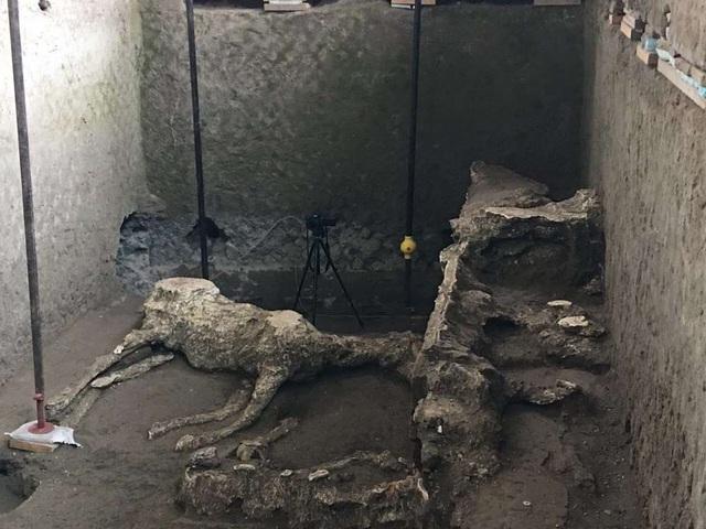 Phát hiện xác ngựa còn nguyên yên cương sau thảm hoạ khủng khiếp Pompeii - Ảnh 1.