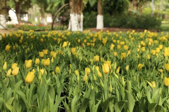 Chiêm ngưỡng vườn hoa xuân Keukenhof – Hà Lan tại Ecopark - Ảnh 2.