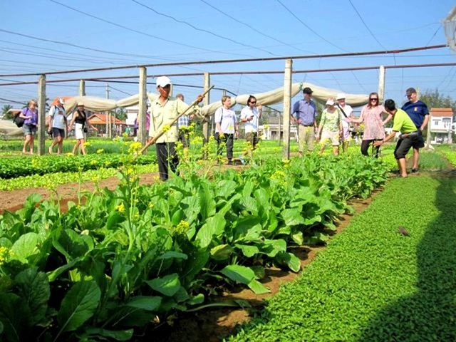 Du khách được hướng dẫn trồng và thu hoạch rau xanh khi tham gia tour du lịch sinh thái