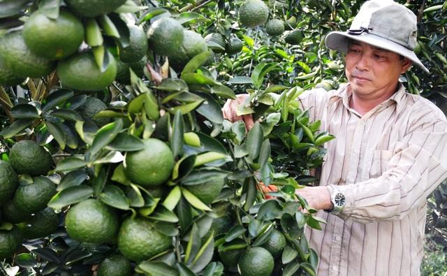 Hướng tới, An Giang tiếp tục phát triển ngành nông nghiệp theo hướng áp dụng công nghệ cao, phát triển bền vững.