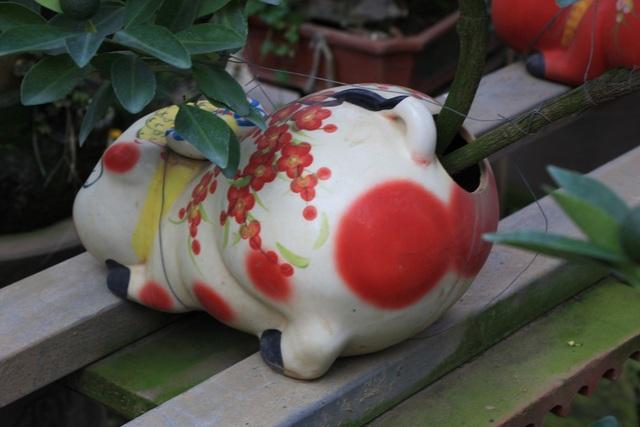 Vị trí trồng cây trên người chú heo cũng rất dễ thương, đôi khi khiến người mua bật cười thú vị.