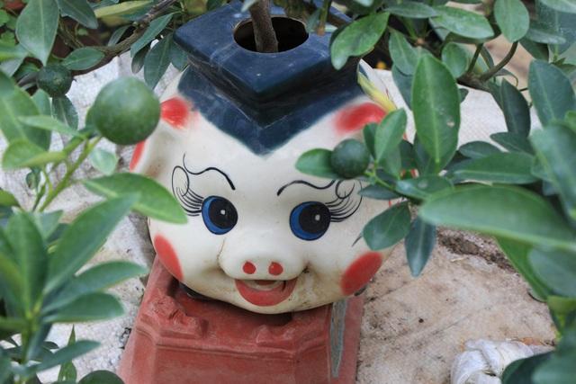Theo chủ vườn, những chú heo cõng quất bonsai này năm nay khá được lòng người mua.