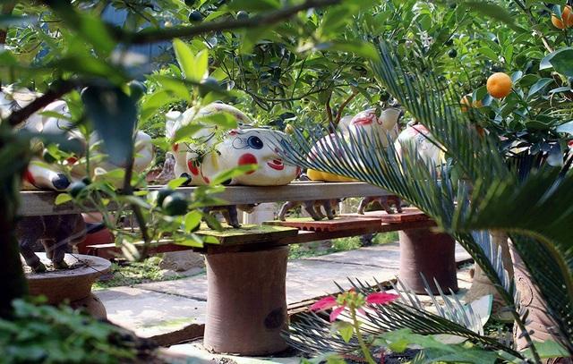 Vườn trồng được thiết kế nhiều giá để đỡ các chậu quất bonsai.