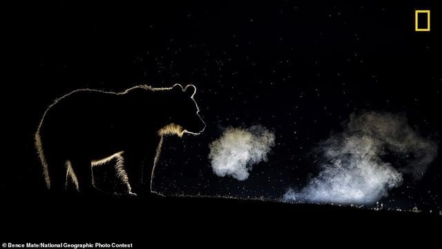 10 bức ảnh ấn tượng trong giải thưởng nhiếp ảnh National Geographic 2018 - 9