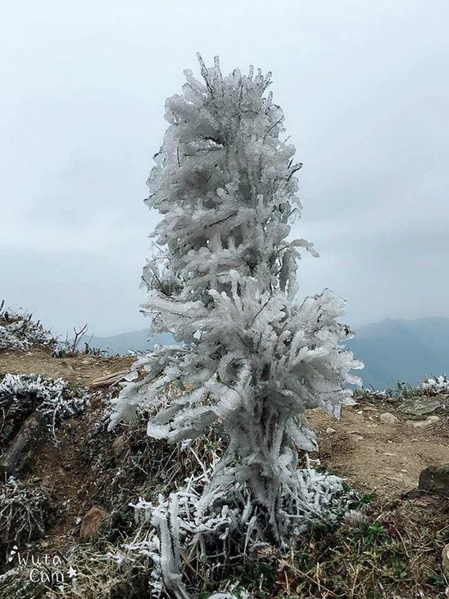 Du khách thích thú với băng tuyết phủ trắng đỉnh Mẫu Sơn - 9