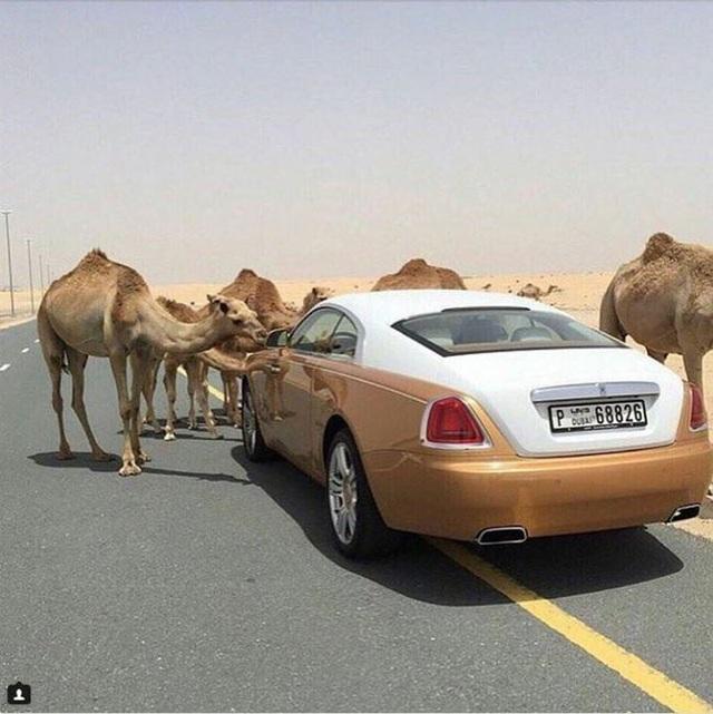 """Một tài khoản đáng chú ý khác là """"Hội con nhà giàu Dubai"""""""