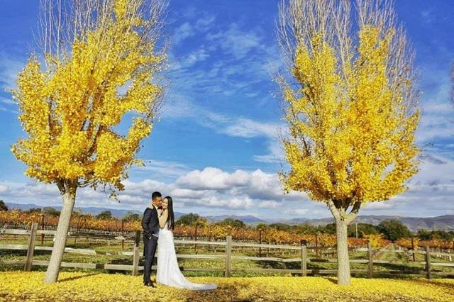 Nhiều người nhận xét vợ chồng Tuấn Hưng diện trang phục như cô dâu, chú rể và gọi đây là bộ ảnh cưới lần 2.