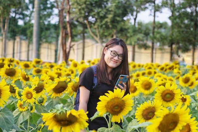 Bạn Phương Ngân (Hà Đông) cho biết, đã dự định đến Nghệ An để ngắm nhìn vườn hoa hướng dương nhưng lại mới được biết ngay gần trung tâm Hà Nội cũng có khu vườn này nên đã tranh thủ đến đây ngay. Vườn tuy có diện tích không quá lớn nhưng hoa ở đây khá to và đẹp.