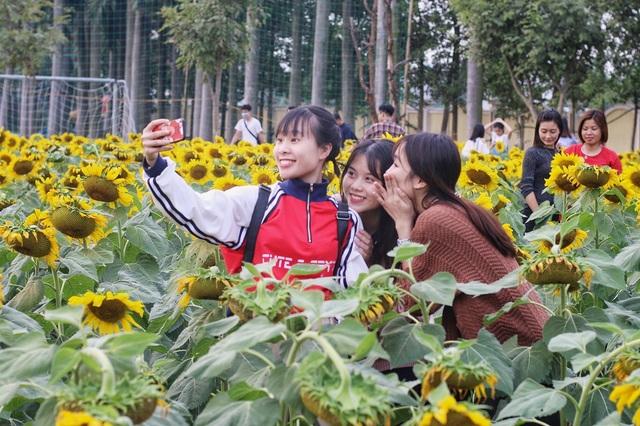 Không chỉ những bạn trẻ, nhiều cô; bác ở độ tuổi trung niên cũng tới đây để tận hưởng vẻ đẹp của loài hoa này.