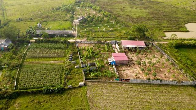 Một phần đất nằm trong 100 ha này đang được người dân trồng cây ăn quả và nuôi gia súc.