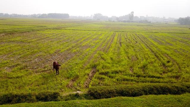 Diện tích đất này hiện được người dân xã Tân Minh trồng cây hoa màu.
