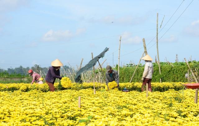 Lúc đầu chỉ vài hộ trồng hoa cúc, sau đó người dân nhận thấy hiệu quả kinh tế mang lại khá cao nên số hộ trồng hoa tăng lên. Hiện nay, xã Nghĩa Hà có trên 100 hộ tham gia trồng cúc với diện tích khoảng 7 ha, tập trung chủ yếu ở các thôn Hổ Tiếu, Bình Đông, Hàm Long…