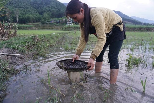 Người dân huyện Ba Tơ dùng sàng tre bắt nòng nọc dưới nước.