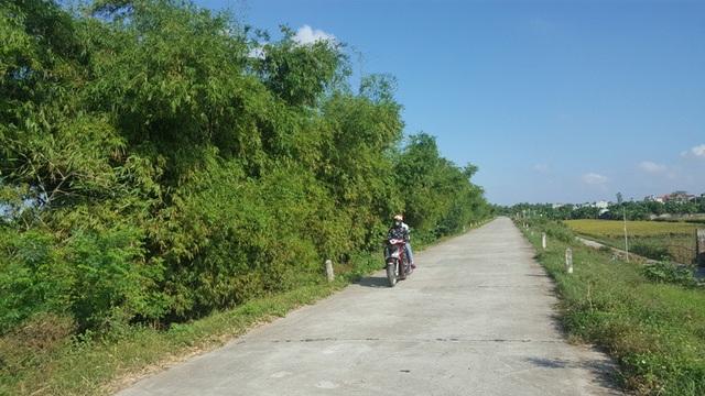 Lũy tre chắn sóng được trồng ven đê sông Hồng, đoạn qua địa phậnxã Xuân Tân - Xuân Trường, Nam Định.
