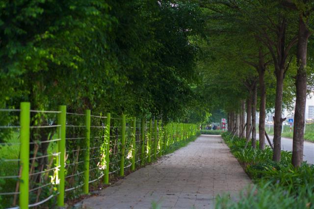 Tại Hồng Hà Eco City có thể dễ dàng bắt gặp hình ảnh các cụ già người tản bộ, người tập dưỡng sinh dưới tán cây xanh mát