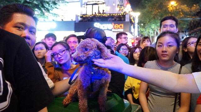 Chú cún cưng này có lẽ là nhân vật hiếm hoi và đặc biệt nhất trong sự kiện nên rất được du khách quan tâm, chụp ảnh