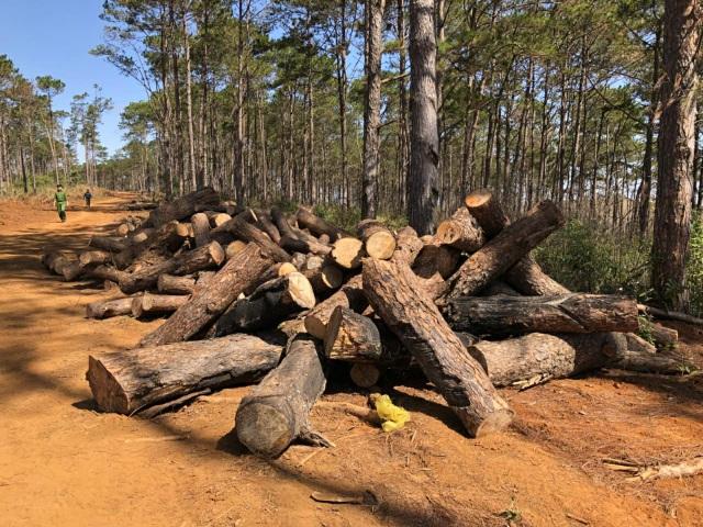 Lợi dụng dọn dẹp cây bụi, phá nát hàng trăm cây rừng cộng đồng - 1