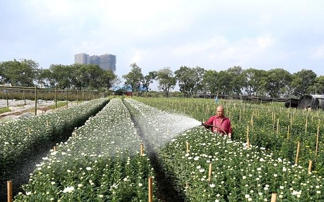 Cánh đồng hoa làng Tây Tựu