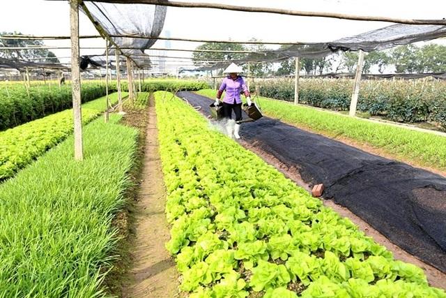 Rau được trồng xen canh với hoa.