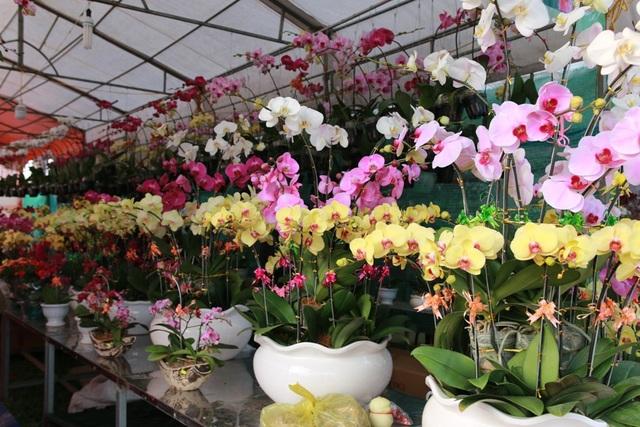 Hàng trăm loại hoa đang đua nhau khoe sắc chào đón xuân về