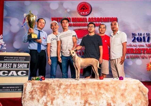 Anh Sơn tham gia cuộc thi dogshow ở TP. HCM, trong cuộc thi này có 40 chú chó tham gia và chú chó Phú Quốc của anh vinh dự đạt giải Nhì tại cuộc thi.