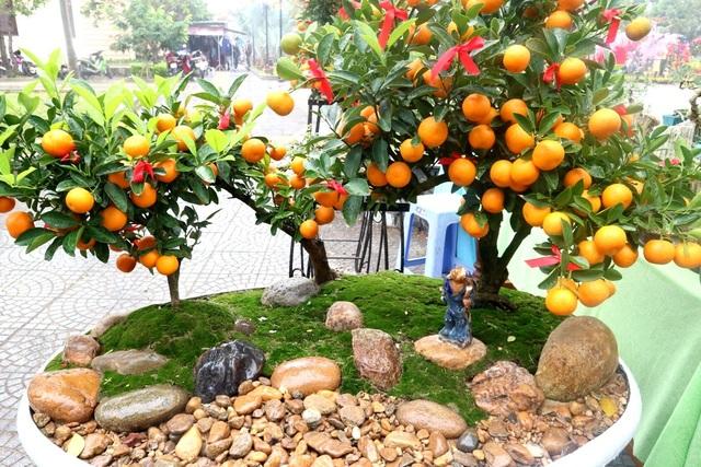 Ngoài các loại cây truyền thống dịp Tết như quất cảnh, hoa cúc, thược dược… thì nhiều chậu cảnh hình thù bắt mắt, xinh xắn cũng được người dân quan tâm, lựa chọn