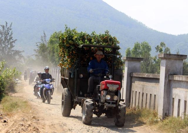 Phú Yên: Kiếm tiền từ phụ bán quất cảnh dịp cận Tết - 4