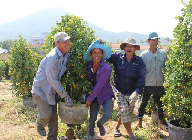 Phú Yên: Kiếm tiền từ phụ bán quất cảnh dịp cận Tết - 7
