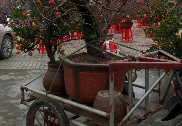Để vận chuyển hoa, cây cảnh an toàn trong quá trình di chuyển, ngoài việc quen đường, khéo léo thì người vận chuyển phải biết cách sử dụng phương tiện đi kèm để đáp ứng với nhiều chủng loại hoa, cây cảnh. Ngoài ra, cần phải chằng néo cẩn thận để tránh va đập, hư hỏng trong khi di chuyển.