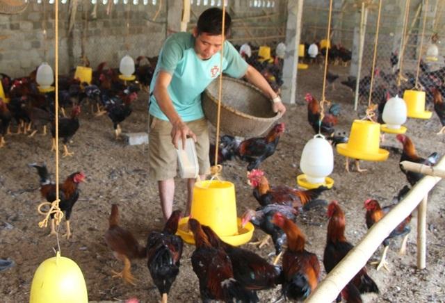 Mô hình nuôi gà dưới đệm lót sinh học của anh Hán đem lại thu nhập cao cho gia đình