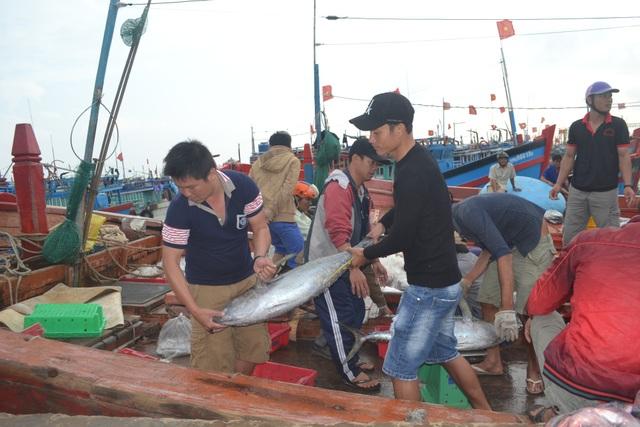 Trong chuyến biển cuối năm, ngư dân Lý Sơn trúng đậm cá ngừ đại dương và cá chàm mắt đỏ