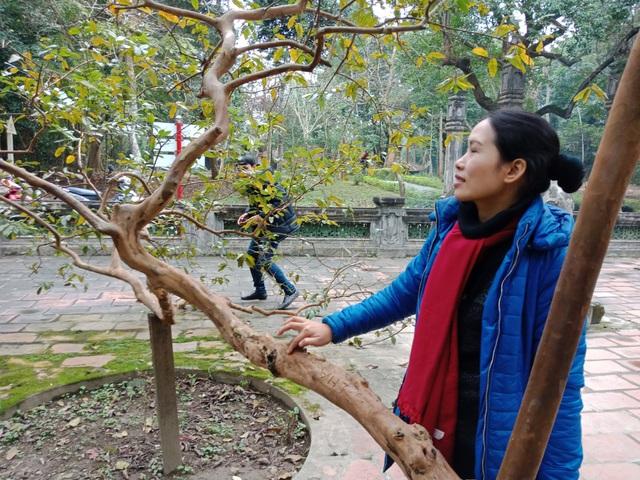 Chỉ cần gãi nhẹ vào thân là toàn bộ cây rung lên như đang cười với du khách