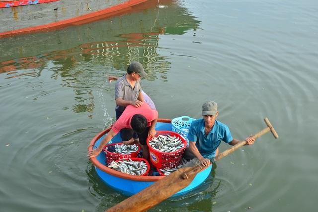 Trở về từ chuyến biển, ngư dân thu được nhiều tôm cá trong mẻ lưới cuối năm
