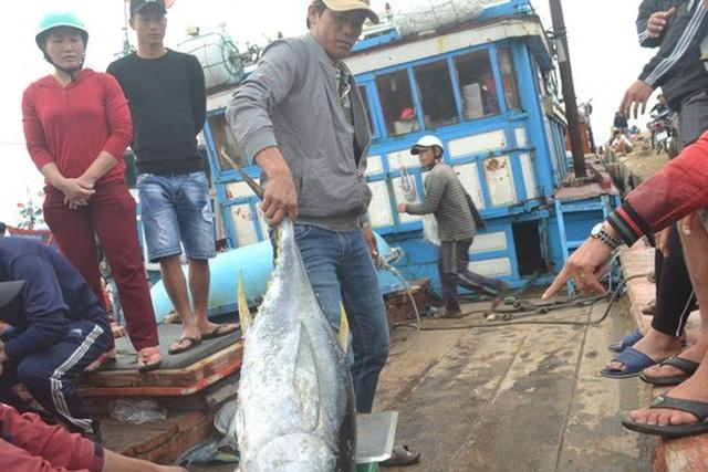 Nhiều tàu cá của ngư dân Lý Sơn cho sản lượng khai thác cao
