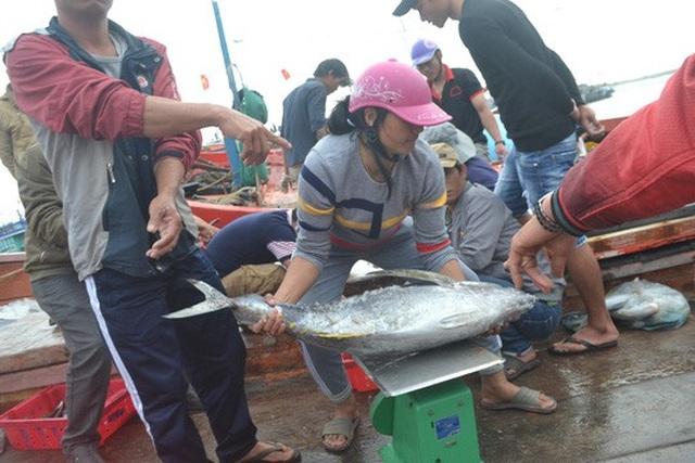 Nhiều tàu cá của ngư dân Lý Sơn cho sản lượng khai thác cao.